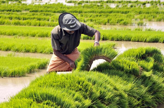 the impact of agricultural growth on Abstract in recent decades, the main and potential contribution of agriculture to economic growth has been a subject of much controversy among development economists as some contend that agricultural development is a pre-condition for industrialization, others strongly object it and.